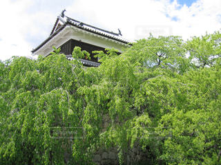上田城址公園の櫓の木々の写真・画像素材[1313547]