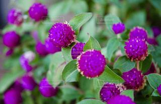 近くの花のアップの写真・画像素材[1313591]