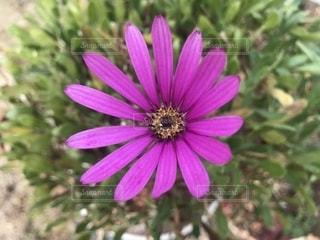 近くの花のアップの写真・画像素材[1314220]