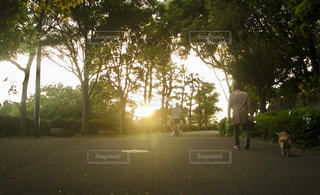 ツリー横の通りを歩く人々 のグループの写真・画像素材[1317174]
