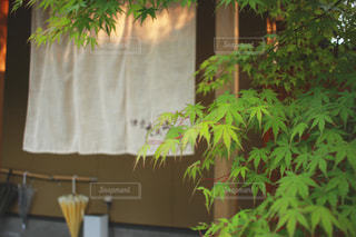 渚亭たろう庵の写真・画像素材[1321490]