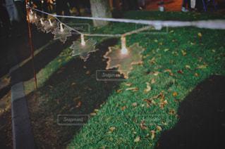 クローズ アップ庭園のの写真・画像素材[1510743]