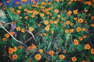 カラフルなフラワー ガーデンの写真・画像素材[1510744]
