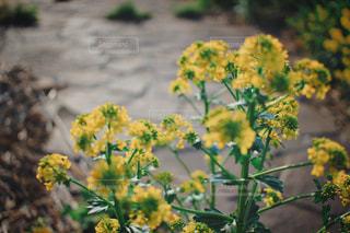 花の写真・画像素材[2132125]