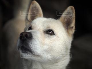 近くにカメラを見て犬のアップの写真・画像素材[1315585]