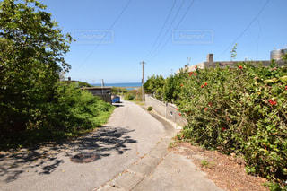 島の住宅街の写真・画像素材[1313998]