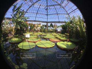 オオオニバスの温室(魚眼)の写真・画像素材[1313920]
