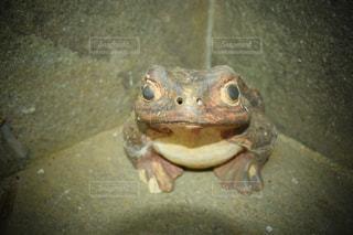 カエルの置物の写真・画像素材[1373643]