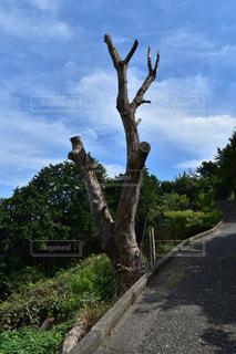 枯れ木がピースの写真・画像素材[1396229]