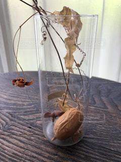 カラスウリと釣花の写真・画像素材[1405859]