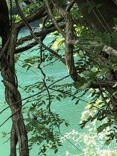 木々の間から水面を見るの写真・画像素材[1475568]