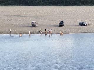 河原で遊ぶ犬と人の写真・画像素材[1475576]