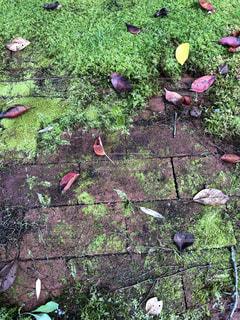 落ち葉の写真・画像素材[1574905]