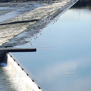 白鷺の居る川の堰の写真・画像素材[1609158]