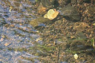 riverの写真・画像素材[1482778]