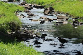 riverの写真・画像素材[1482785]