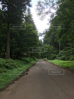 未舗装の道路側の木のパスの写真・画像素材[1315107]