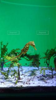 水面下を泳ぐ魚たちの写真・画像素材[1316165]
