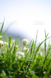 春の土手にて2の写真・画像素材[1324345]