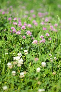 春を見つけた1の写真・画像素材[1324346]