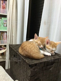 猫の写真・画像素材[40591]