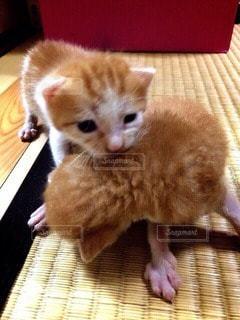 猫の写真・画像素材[40614]