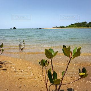海の写真・画像素材[507354]