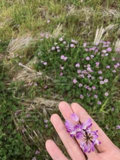 花の写真・画像素材[507400]