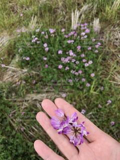 花の写真・画像素材[507402]