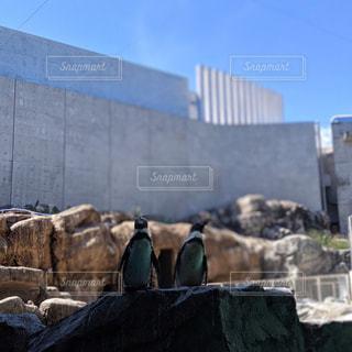 ペンギン水族館にての写真・画像素材[2764698]