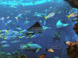 鴨川シーワールドのお魚たち♡の写真・画像素材[1326520]