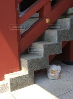 猫 × 神社の写真・画像素材[1319058]