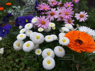 花々の写真・画像素材[1381624]