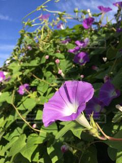 近くに紫の花のアップの写真・画像素材[1397623]