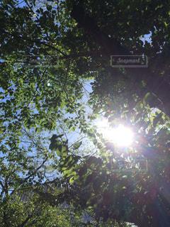 近くの木のアップの写真・画像素材[1425929]