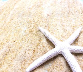 砂の中のヒトデの写真・画像素材[1427517]