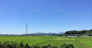 背景の木と大規模なグリーン フィールドの写真・画像素材[1429947]