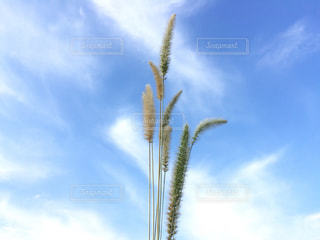ヤシの木と青い空のグループの写真・画像素材[1435510]