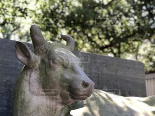 近くに牛のアップの写真・画像素材[1510836]