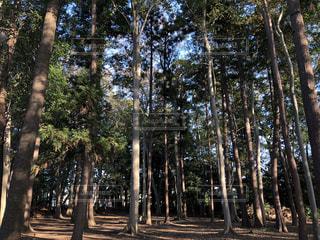 森の中の木の写真・画像素材[1564362]