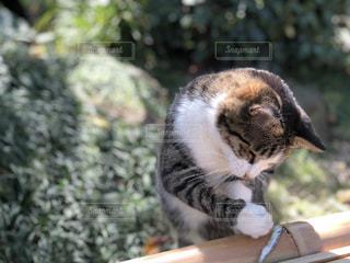 猫の写真・画像素材[1579305]