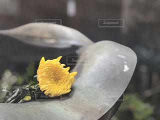 近くに黄色い花のアップの写真・画像素材[1595225]
