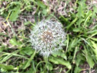 近くの緑の植物をの写真・画像素材[1625175]