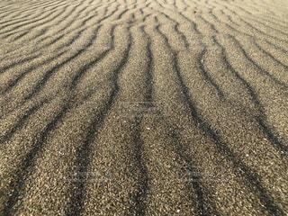 砂紋(風紋)の写真・画像素材[1695347]