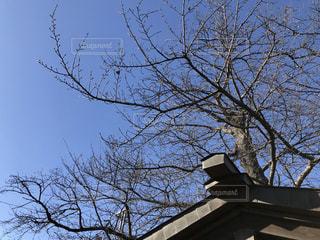 ツリーの下に座って背の高い時計塔の写真・画像素材[1699550]