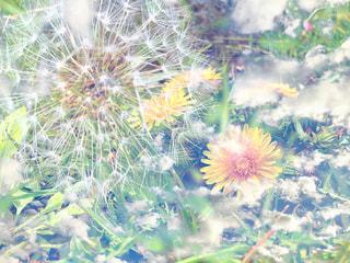 花のクローズアップの写真・画像素材[2119749]