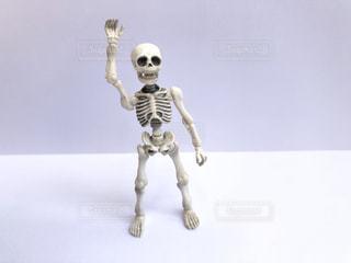骨の写真・画像素材[2148714]