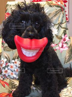 近くに犬のアップ 笑顔 くちびるの写真・画像素材[1318708]