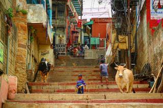 インドの路地の写真・画像素材[1318593]