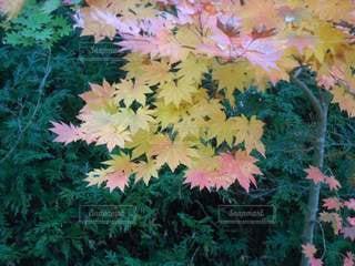 秋の足音の写真・画像素材[2734104]